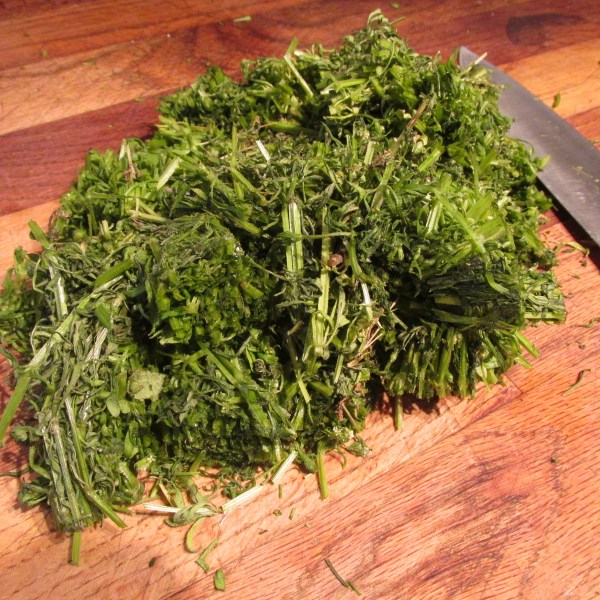 fresh cleavers chopped and ready to tincture