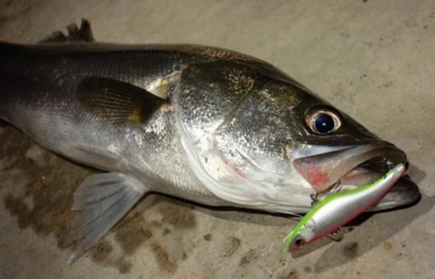 【冬(12月、1月、2月)のシーバス釣り】釣り方、場所、時間、潮、人気おすすめ【ランキング】