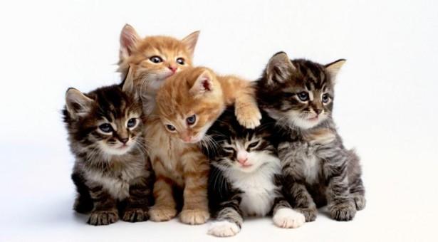 猫に危険な『食べ物』『植物(花)』ってなに?愛猫を守るために知っておこう!対処法はどおすればいいの?