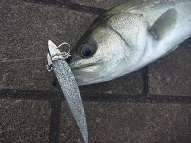 【シーバス・ヒラメ・マゴチ・青物】を【ワインド釣法】で釣る、釣り方、タックル、人気おすすめ【ランキング】