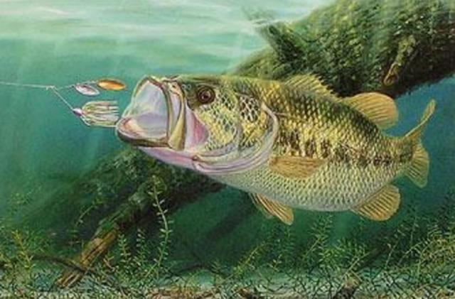 【バス釣り】【スピナーベイト】で釣る方法、種類、重さ・カラー、人気おすすめ【ランキング】