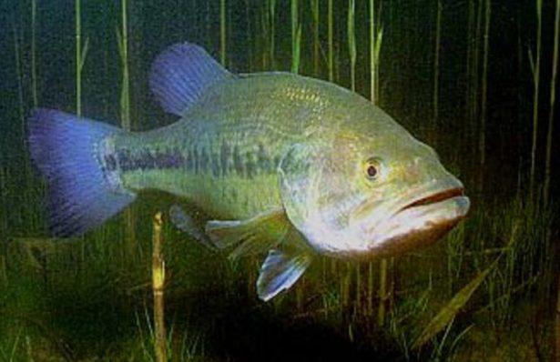 【バス釣り】【冬(12月、1月、2月)の攻略方法】釣り方、ポイント、人気おすすめ【ランキング】