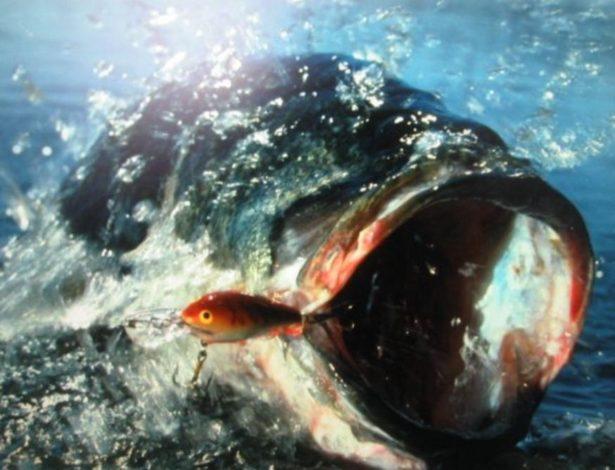 【バス釣りで濁り・増水・減水の対処法】釣り方、アクション、カラー(色)、人気おすすめ【ランキング】