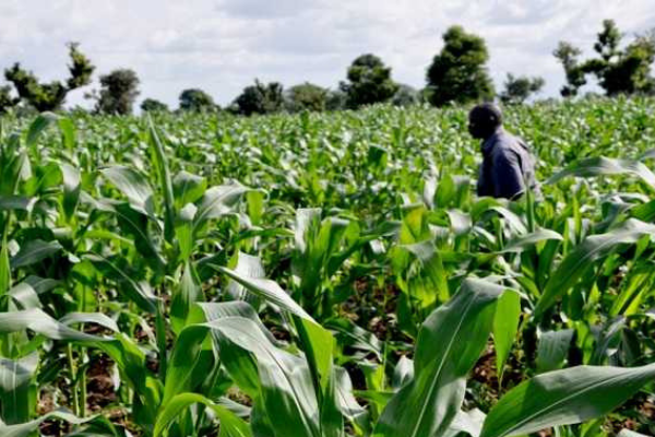 500 young Nigerians to be trained in farmer business school - Businessday NG