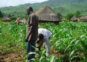 NDETrains 50 Unemployed Kogi Youth in Agricultural Production - Businessday NG