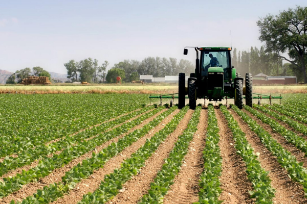 Agro-Industrialisation seen as Nigerias escape plan from economic sabotage -