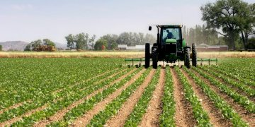Nigeria to secure $1.1bn Brazilian loan to fund Agriculture Green imperative program - Businessday NG