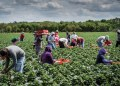 Farmers say lockdown hampering essential inputs supply - Businessday NG
