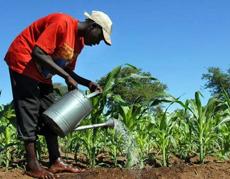 How crowd-farming platforms link smallholder farmers to finance - Businessday NG