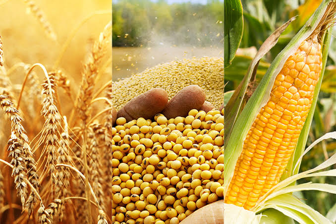 Understanding how to trade agriculture commodities like stocks using ComX - Businessday NG