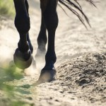 Horse hooves - $ 120 million: Coinbase buys Earn.com in largest ever acquisition