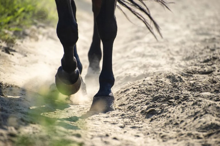 Horse hooves - Cardano Price leads a lone lead as Bitcoin retreats to less than $ 8,000