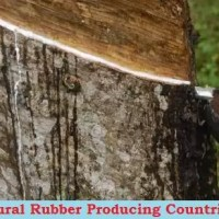 Top 10 Rubber Producing Countries in World [Uses & Types]