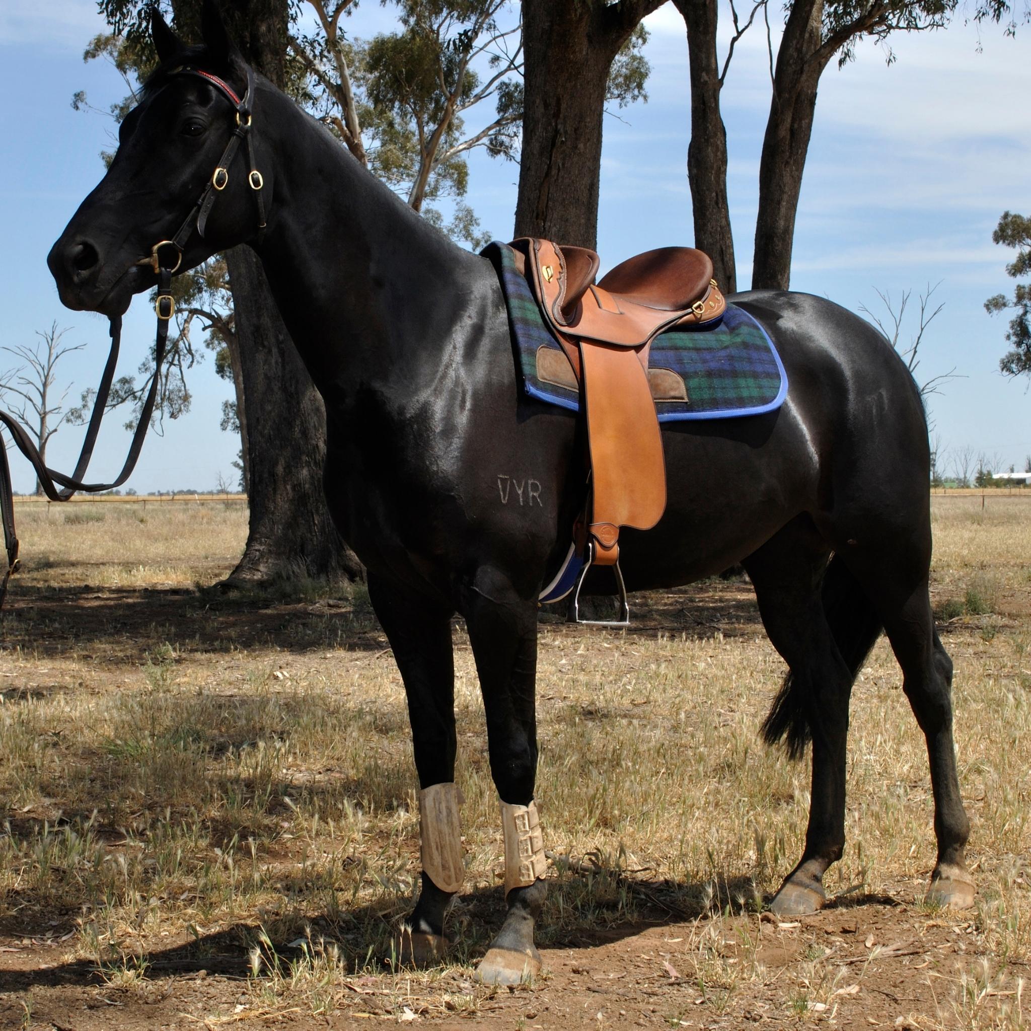 Horseman Fender Saddle by John Lordan