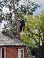 Timber Tree Services