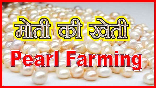 Businee Maantra Pearl Farming