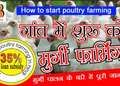 How to start poultry farming