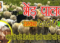 How to Start Sheep Farming Business in India