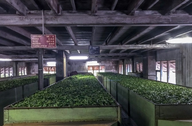 Welshpool Manufacturer Supporting Sri Lanka's Tea Industry