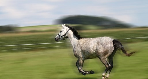 Swansea Solicitor Comes Fourth in First Ever Horse Race