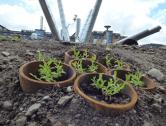 Swansea University Develops a Post-Industrial Wildflower Garden at its Bay Campus