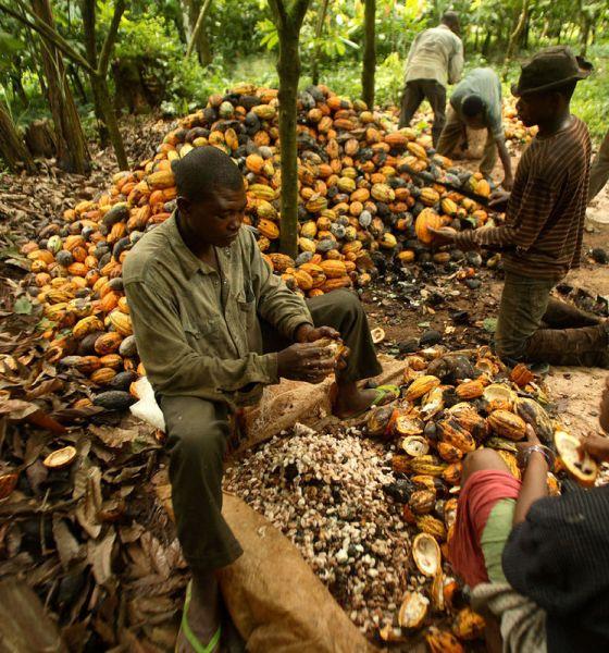 cocoa-farmers