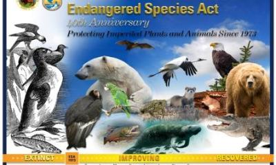 Buhari Signs Endangered Species Act Into Law