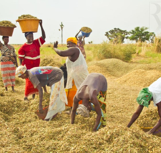 FG Targets Single Digit Interest Rate Loan for Farmers