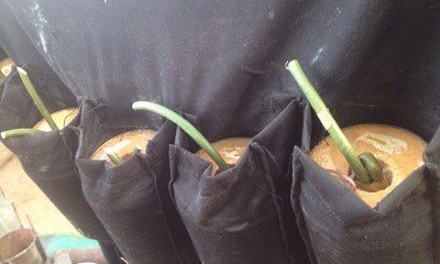 Suicide Bomber Attacks Another Mosque Near UNIMAID