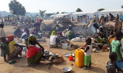 UN Criticises Forced Return of Nigerian Refugees from Cameroon