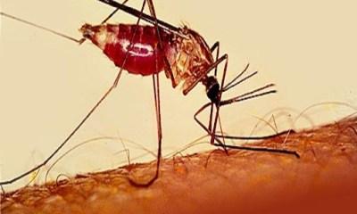 Saraki Pressures FG on $300m Malaria Bond