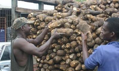 Nigeria to Export Yams to UK June 29—Ogbeh