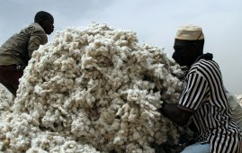 cotton sector nigeria