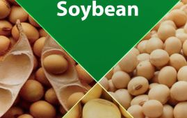Soybeans Production