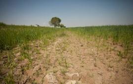 Restore Degraded Landscapes