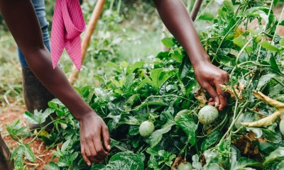 Africa's Food System