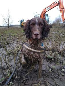 Wagtail UK Conservation Sniffer Dog