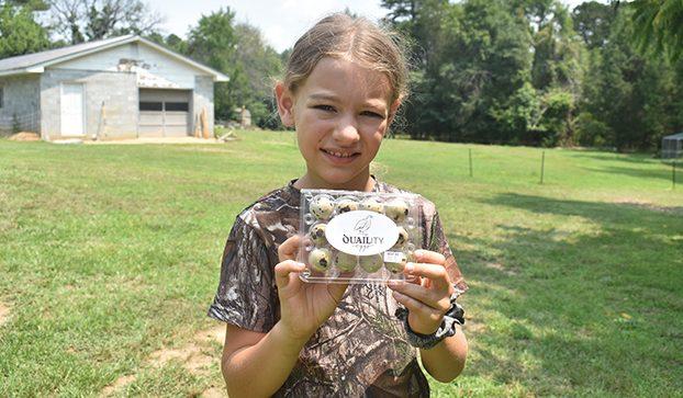 Young entrepreneur learns lesson of responsibility by raising quail, selling eggs – Salisbury Post | Salisbury Post
