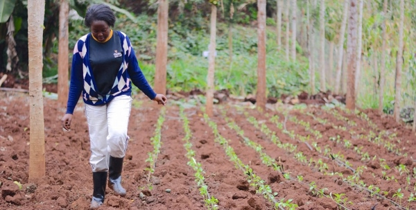 Farming most popular side-hustle among youth - Business Today Kenya