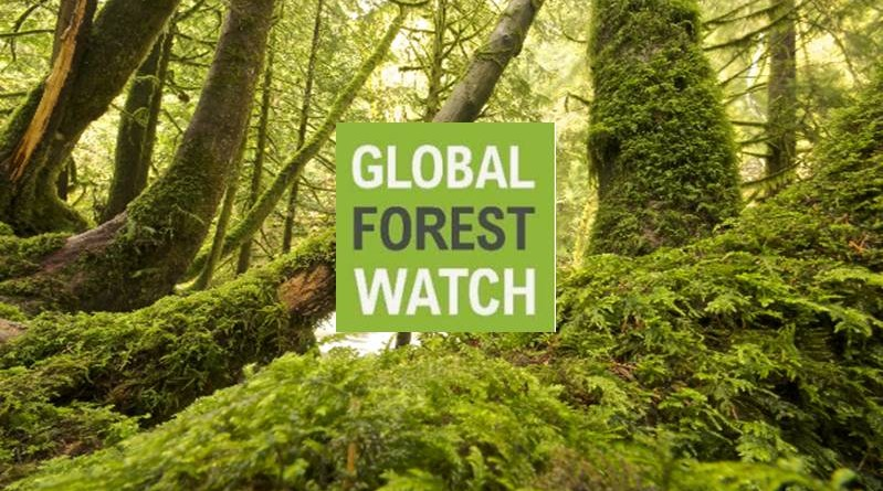 Each year, forest and land fires rage across indonesia, producing a toxic haze that threatens human health, the economy, and the environment. Global Forest Watch Announced 2019 Small Grants Fund Sgf Businesstrumpet News