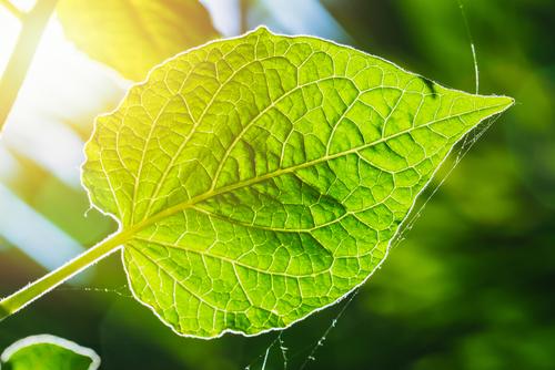 photosynthesize