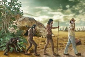 did humans evolve from apes