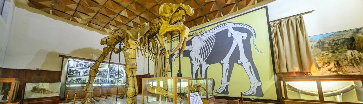 Виртуална разходка на Палеонтологичен музей Асеновград