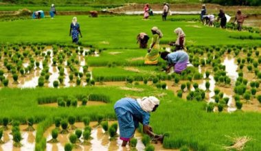 List of agriculture loan in nigeria