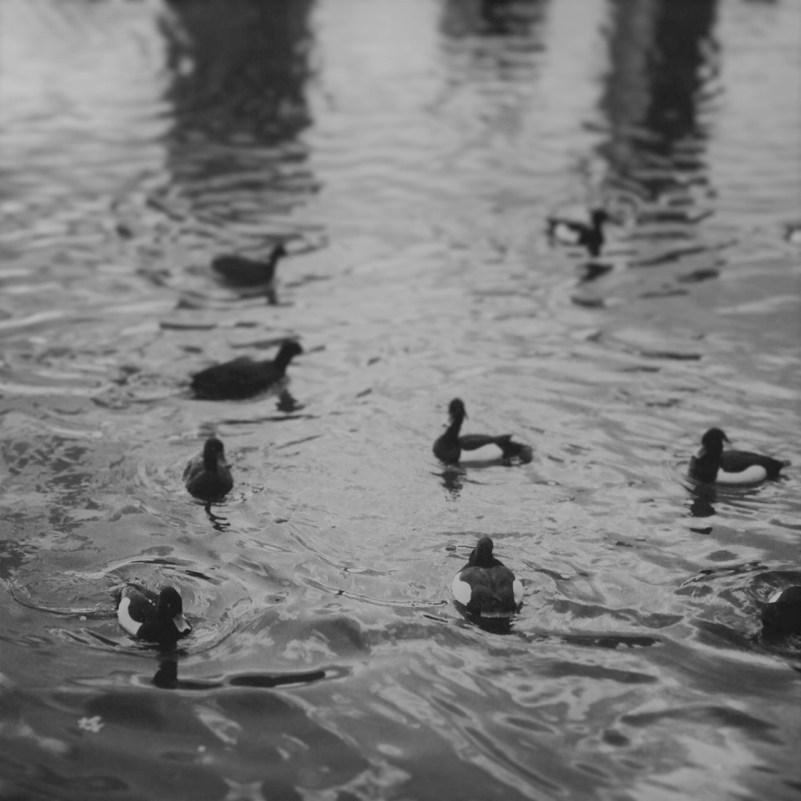 上野公園で撮ったモノクロ写真です