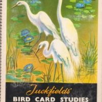 Tuckfields' Bird Card Studies