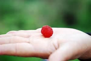 熱帶水蜜桃如何剪枝|愛食網|熱帶水蜜桃如何剪枝