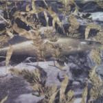 frabill-fishoflage