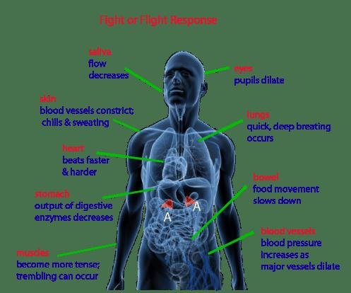 combat adrenal fatigue