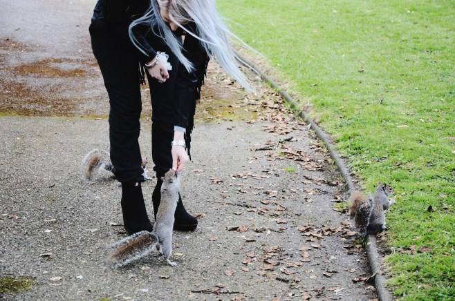 squirrels (12)